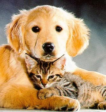 cat-and-dog2