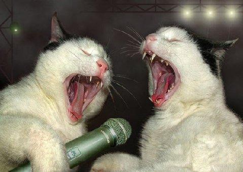 back-up-singers
