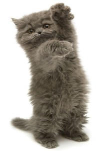 Fearless Cat Scratcher Jazz