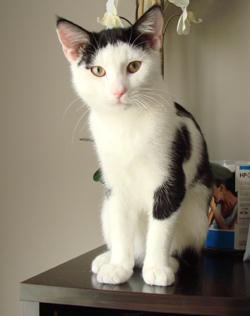 catcounter