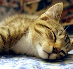 Cat Health Imag