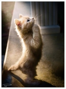 praying_cat