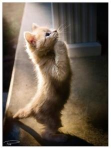 praying_cat