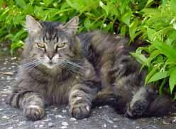 cat-manny1