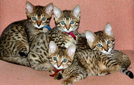mutiple cats