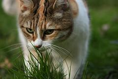 grass and cat