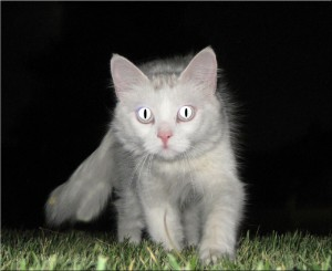 Cat in the Dark Night