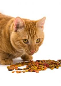 feeding your cat