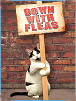 cat_tick_flea